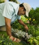 Gardening Boosts Men Sex Drive